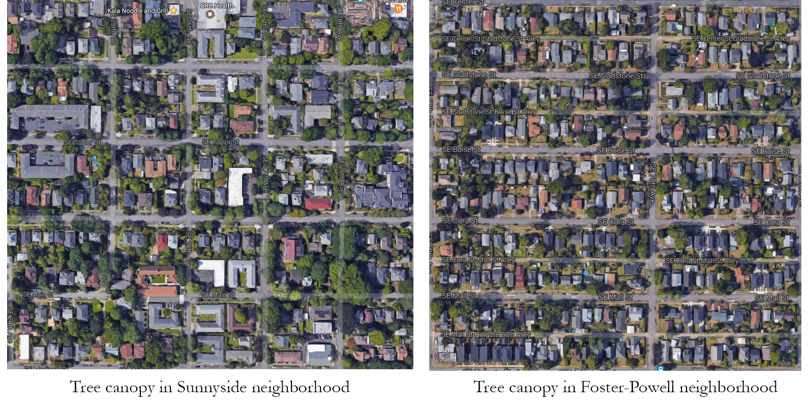Difference of tree canopy in high- and low-income neighborhoods